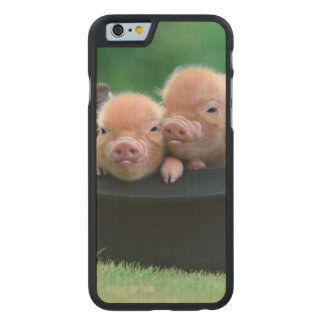 Three little pigs - three pigs - pig hat carved maple iPhone 6 case