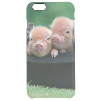 Three little pigs - three pigs - pig hat clear iPhone 6 plus case