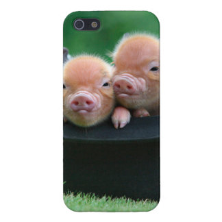 Three little pigs - three pigs - pig hat iPhone 5/5S cover