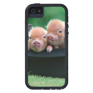 Three little pigs - three pigs - pig hat iPhone 5 cover
