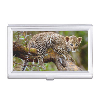 Three Month Old Leopard (Panthera Pardus) Cub Business Card Holders