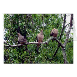 Three Mourning Doves on a Branch Greeting Cards