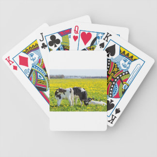 Three newborn calfs in spring dandelions meadow bicycle playing cards