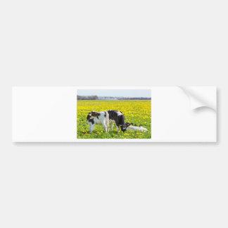 Three newborn calfs in spring dandelions meadow bumper sticker