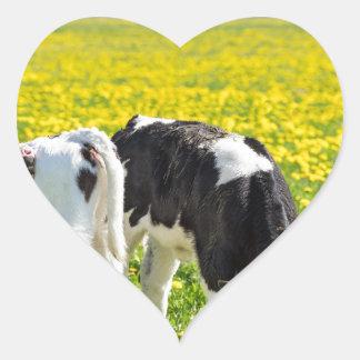 Three newborn calfs in spring dandelions meadow heart sticker