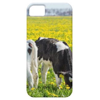 Three newborn calfs in spring dandelions meadow iPhone 5 case