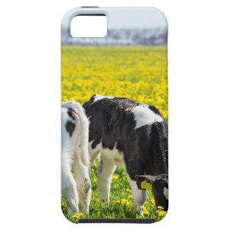 Three newborn calfs in spring dandelions meadow iPhone 5 cover