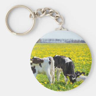 Three newborn calfs in spring dandelions meadow keychain