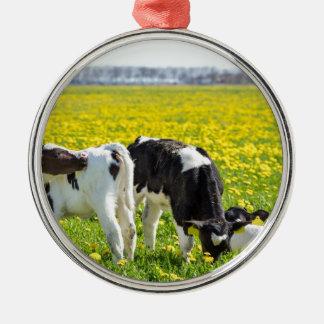 Three newborn calfs in spring dandelions meadow metal ornament
