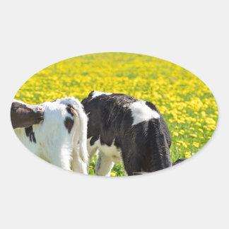 Three newborn calfs in spring dandelions meadow oval sticker