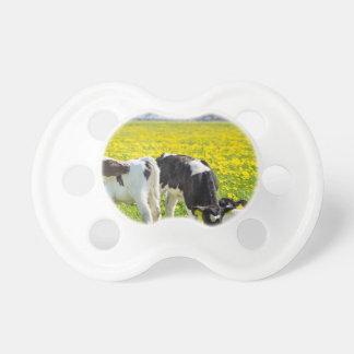 Three newborn calfs in spring dandelions meadow pacifier