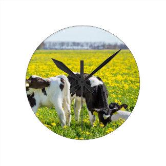 Three newborn calfs in spring dandelions meadow round clock