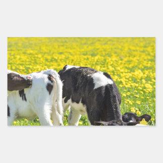 Three newborn calfs in spring dandelions meadow sticker