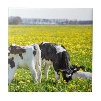 Three newborn calfs in spring dandelions meadow tile