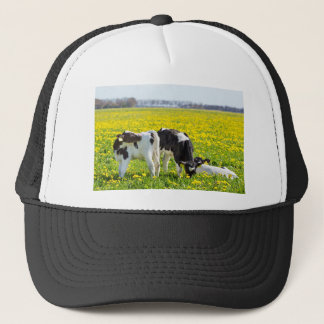 Three newborn calfs in spring dandelions meadow trucker hat