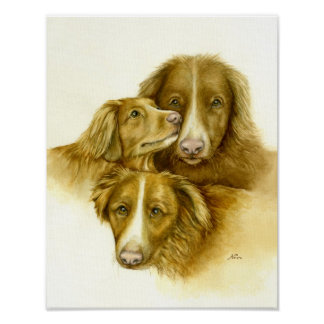 Three Nova Scotia Duck Tolle Retriever Dogs Poster