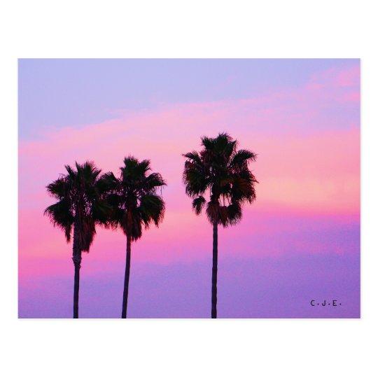 Three Palm Trees Postcard