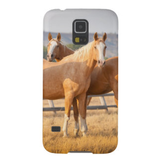 Three Palomino Ponies Galaxy S5 Cover