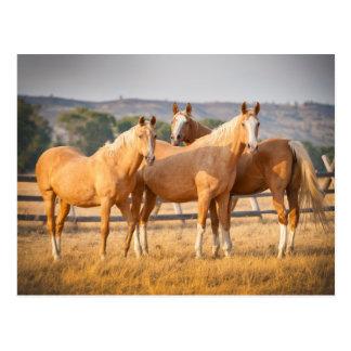 Three Palomino Ponies Postcard