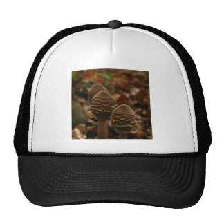 Three parasol mushrooms in the forest 1 trucker hat