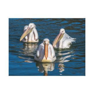 Three pelicans canvas print