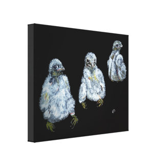 Three Peregrine Chicks Canvas Print