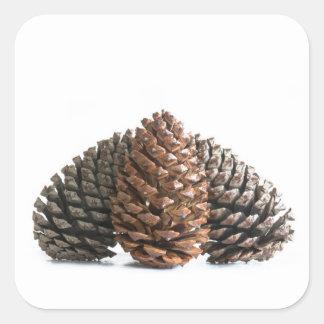 Three pinecones square sticker