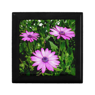 Three Pink Daisy Flowers Gift Box