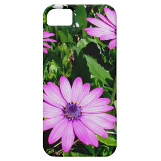 Three Pink Daisy Flowers iPhone 5 Covers