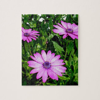 Three Pink Daisy Flowers Jigsaw Puzzle