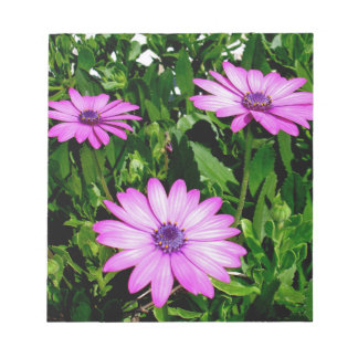 Three Pink Daisy Flowers Notepad