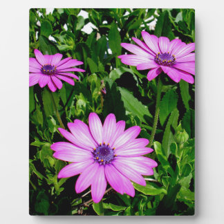 Three Pink Daisy Flowers Plaque
