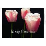 Three pink tulip flowers.  Christmas, holidays. Greeting Card