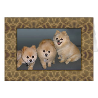 Three Pomeranians Note or Greeting Card
