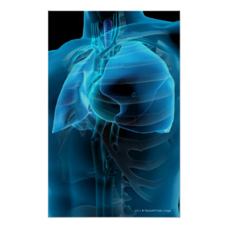 Three quarter view of the heart and lungs poster