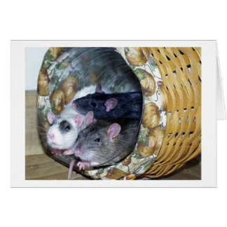 Three Rats in a Basket Card