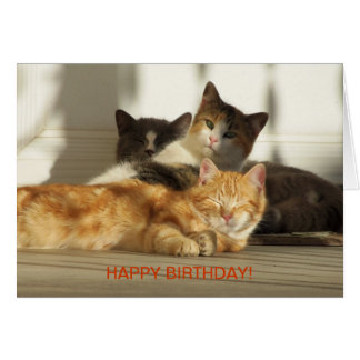 Three Relaxing Cats, Birthday Card
