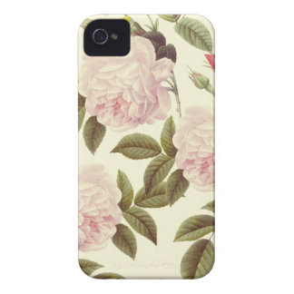 Three Rose Cream Case-Mate iPhone 4 Cases