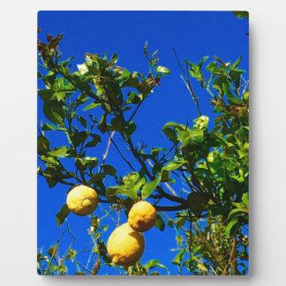 Three Sicilian Lemons Plaque