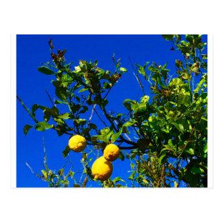 Three Sicilian Lemons Postcard