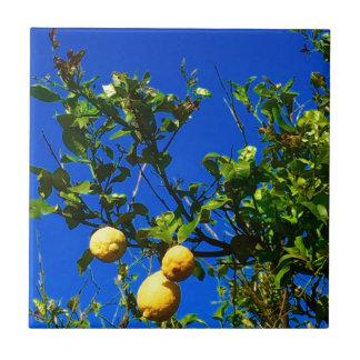 Three Sicilian Lemons Tile