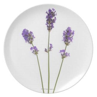 Three stems of English purple lavender flowers, Dinner Plates