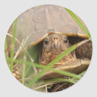 Three-toed Box Turtle Classic Round Sticker