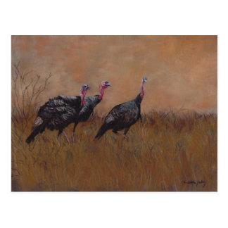 Three Toms Wildlife Art Postcard