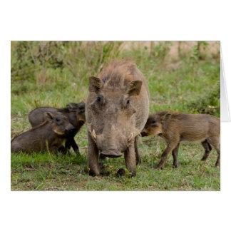 Three Warthog Piglets Suckle On Their Mother Card
