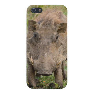 Three Warthog Piglets Suckle On Their Mother iPhone 5/5S Cases