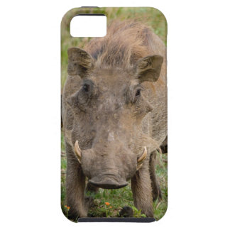 Three Warthog Piglets Suckle On Their Mother iPhone 5 Case