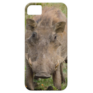 Three Warthog Piglets Suckle On Their Mother iPhone 5 Covers