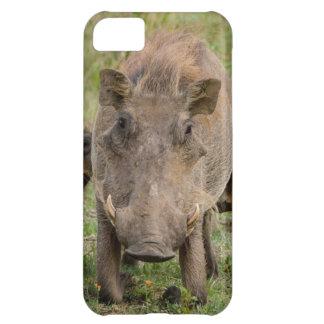 Three Warthog Piglets Suckle On Their Mother iPhone 5C Case