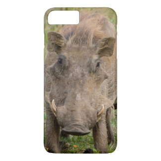 Three Warthog Piglets Suckle On Their Mother iPhone 7 Plus Case